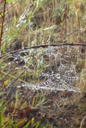 Water Drop Web