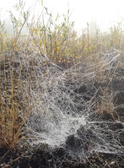 Messy Web