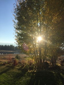 Low Sun in the Aspens