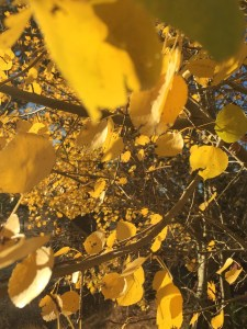 Golden Leaves Close and Far