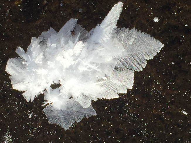 Feather in Ice